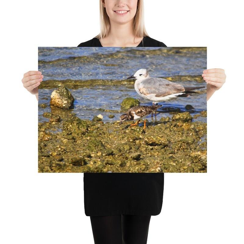Birds Of Hudson Beach