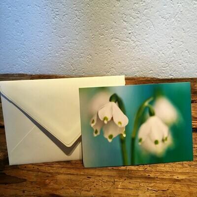 Blütenkarte Märzenbecher