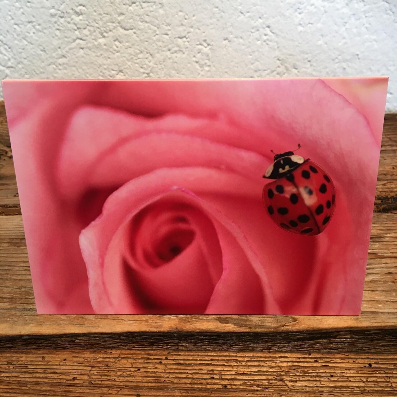 Blütenkarte Käfer