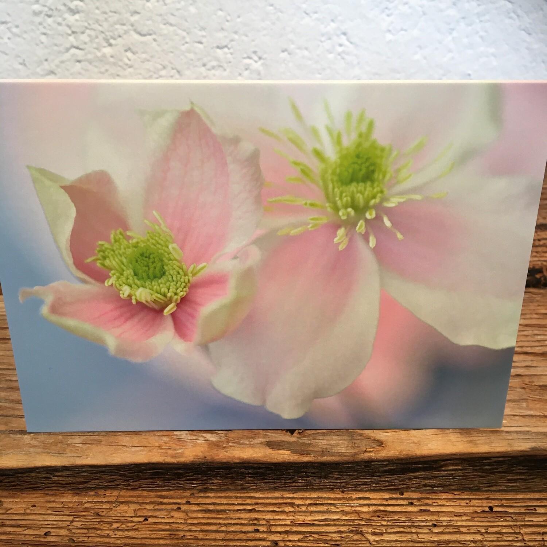 Blütenkarte Clematis