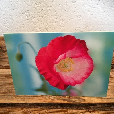 Blütenkarte Mohn