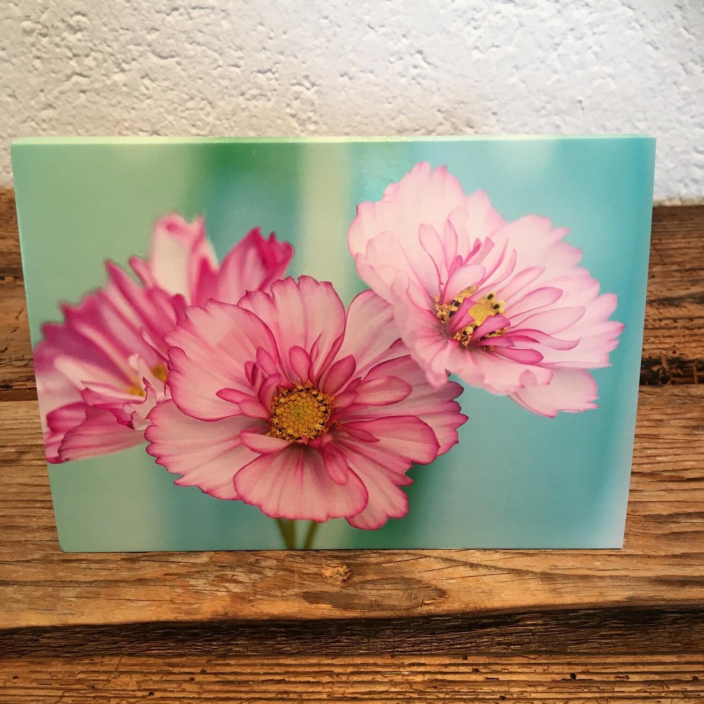 Blütenkarte Cosmea