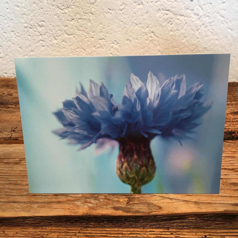 Blütenkarte Kornblume