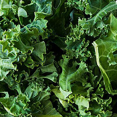Green Kale - Stuckmeyer