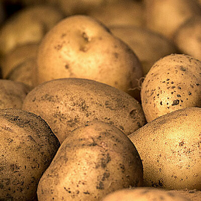 Baker Potatoes