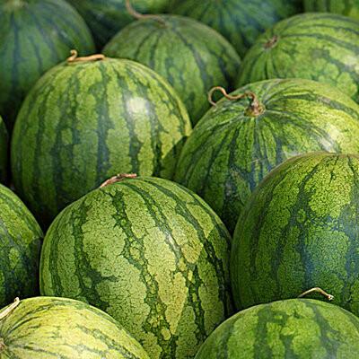 Watermelon - Seedless