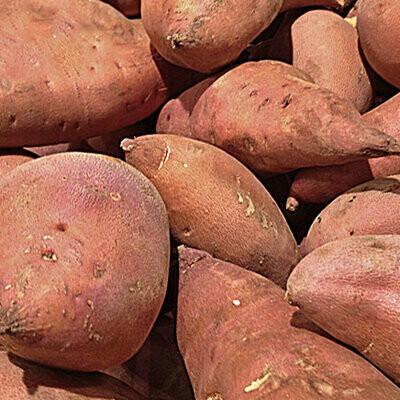 Sweet Potato - Thies Farm