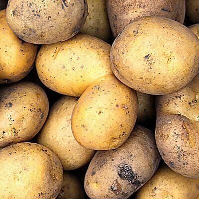 Yukon Gold Potatoes   1LB