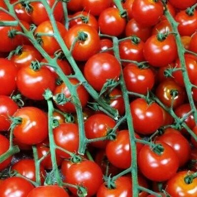 Cherry Tomato on the Vine