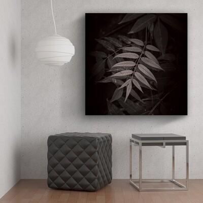SV064 BLACK & WHITE PLANTS