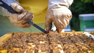 Beginner beekeeping course Saturday May 8th 2021 10h00