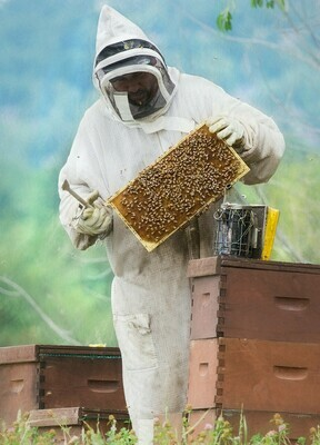 Advanced beekeeping courses