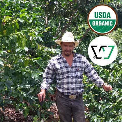 Organic Honduras Pacavita