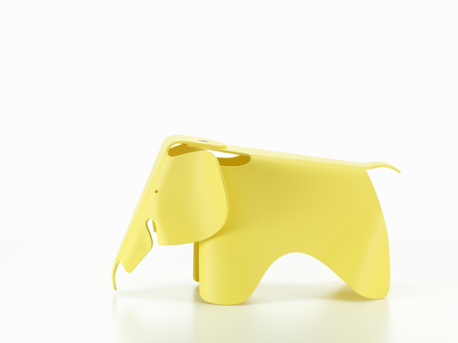 Elephant buttercup Small