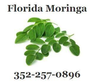 Florida Moringa Trees