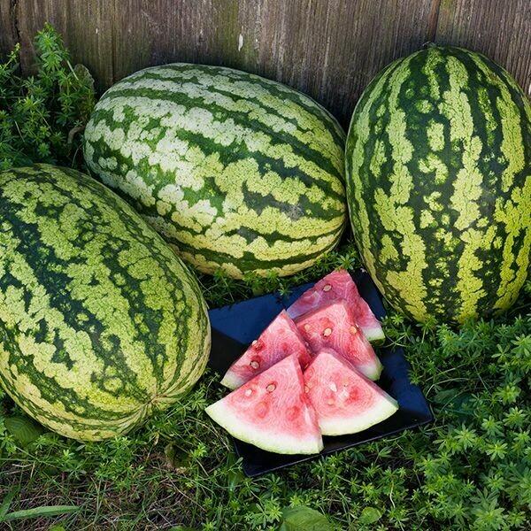 Watermelon- Klondike Blue