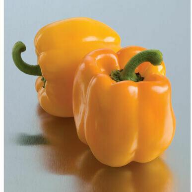 Pepper- Sweet Sunrise