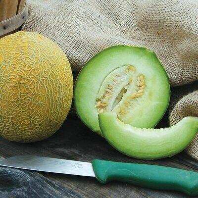 Melon- Arava