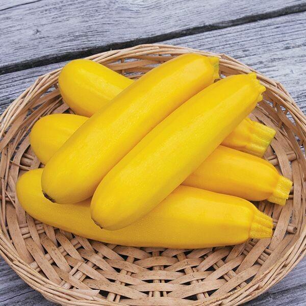Zucchini- Yellowfin F1