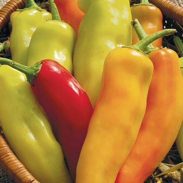 Pepper- Hungarian Hot Wax