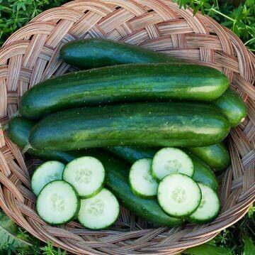Cucumber- Green Finger