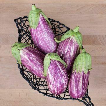 Eggplant- Listadia di Gandia