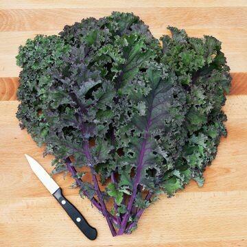 Kale- Curly Roja
