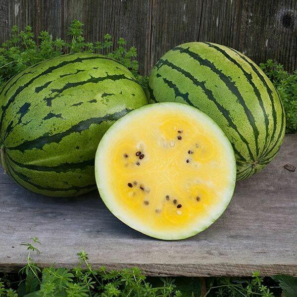 Watermelon- Baby Doll F1
