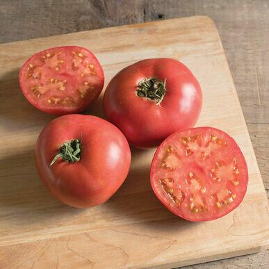 Tomato- Damsel F1