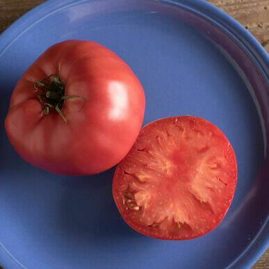 Tomato- Brandywine