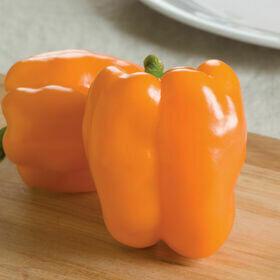 Pepper- Gourmet F1