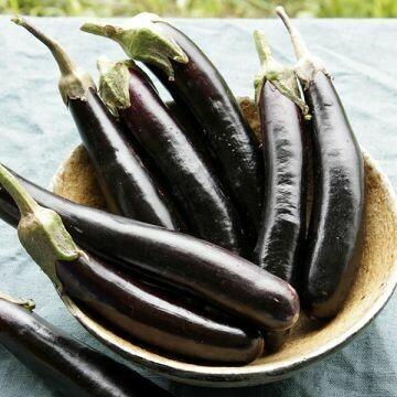 Eggplant- Little Finger