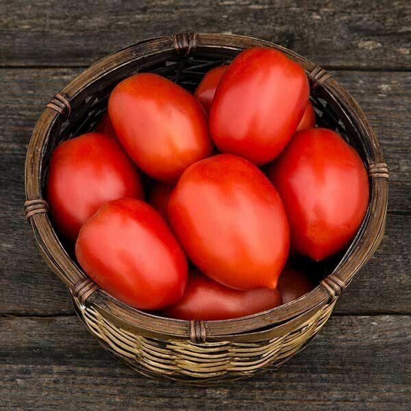 Tomato- Plum Perfect F1