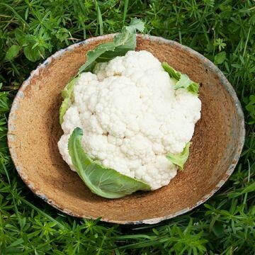Cauliflower- Goodman