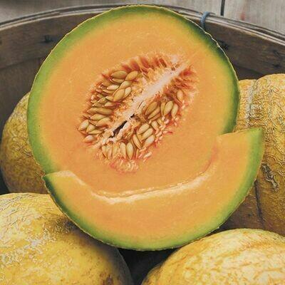 Melon- PMR Delicious