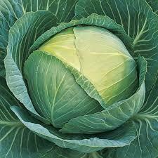 Cabbage- Passat F1