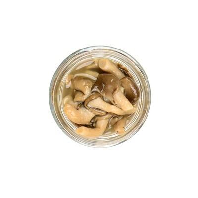 Fermented Grey Oyster Mushrooms