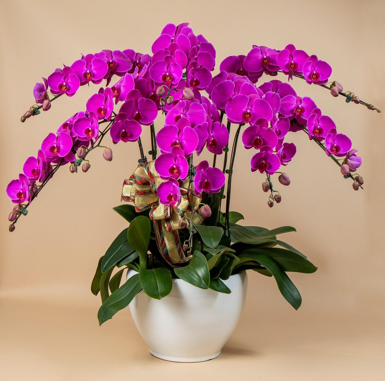 Purple ( 8 in 1 )