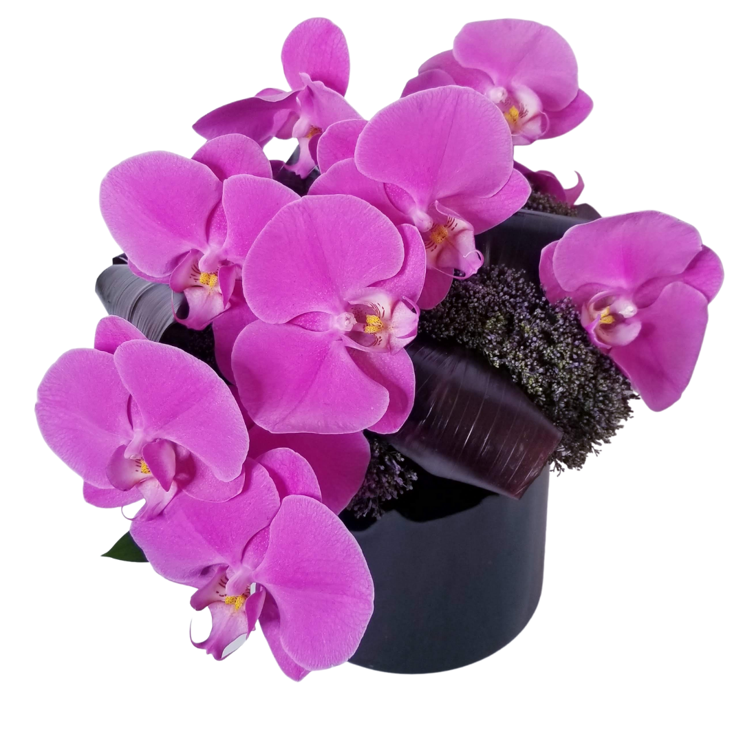 Phalaeanopsis Orchids