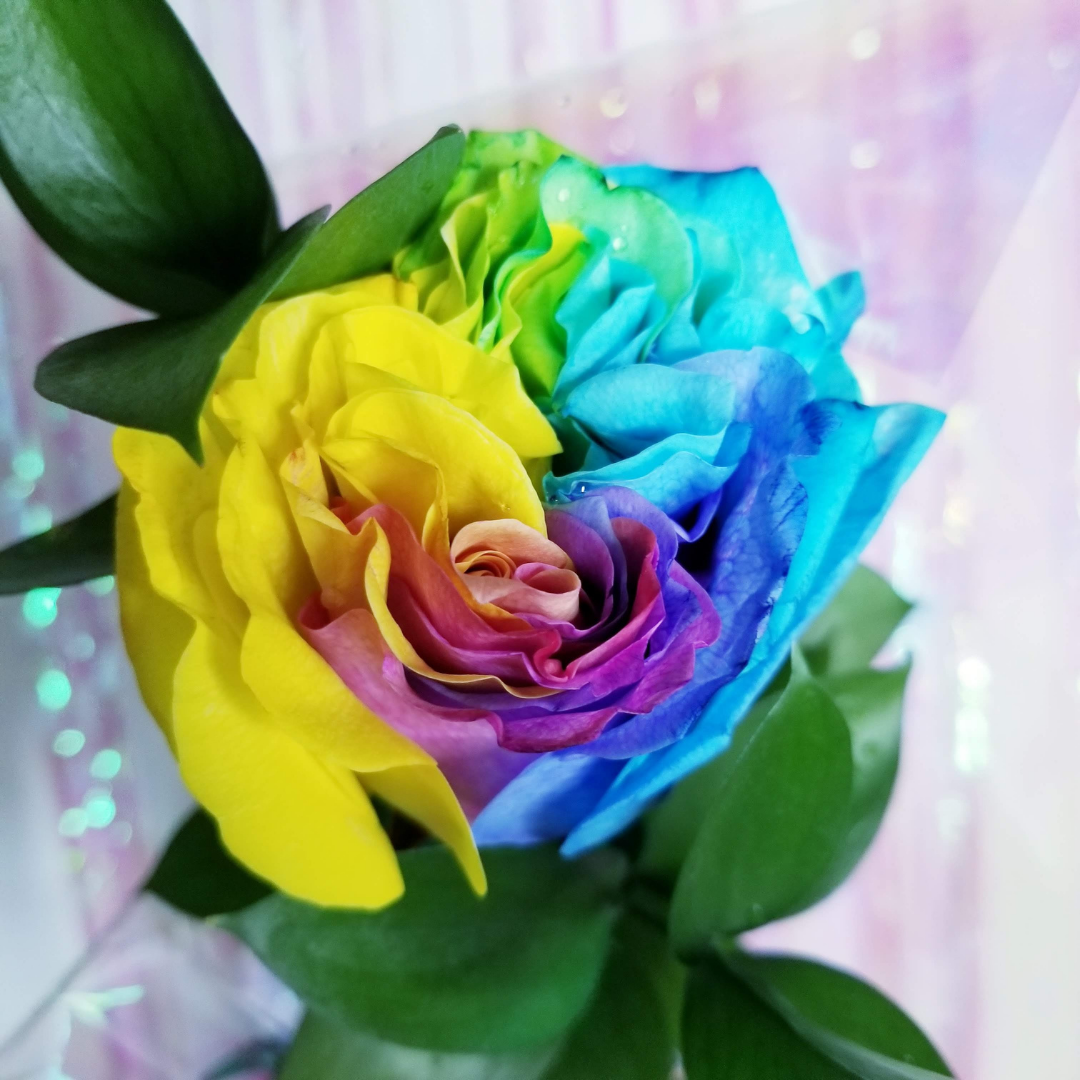 SINGLE STEM RAINBOW ROSE