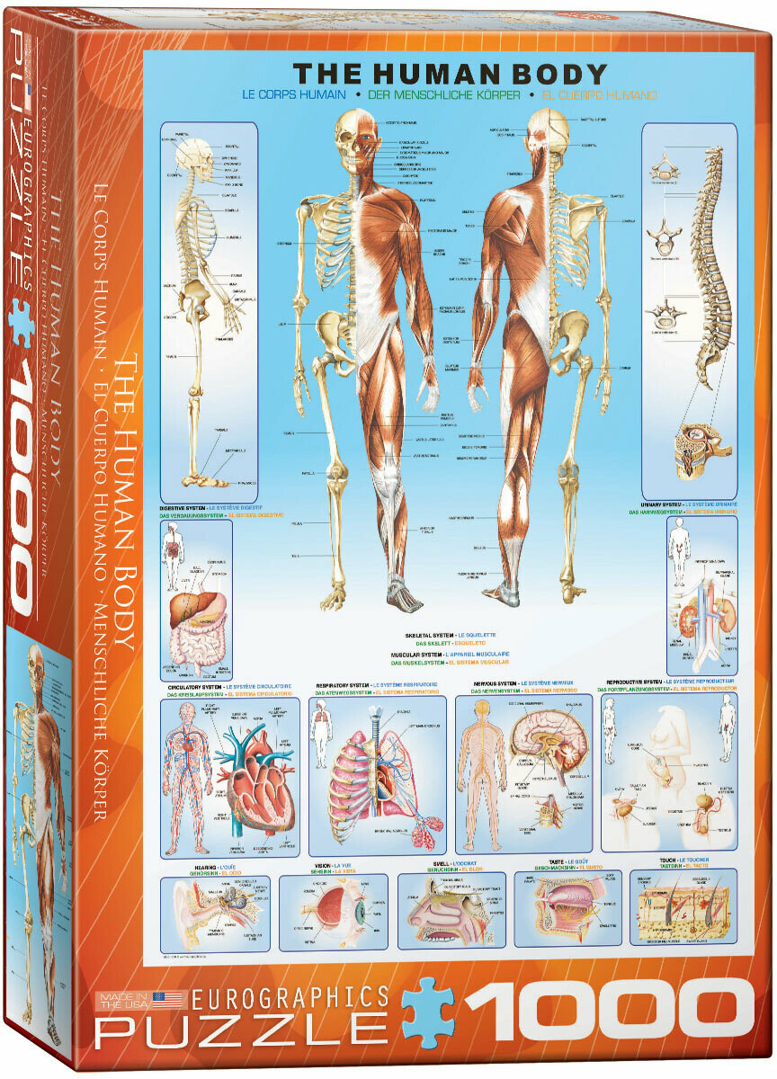 The Human Body 1000 Pc