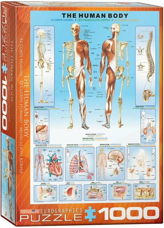 The Human Body 1000 Pc