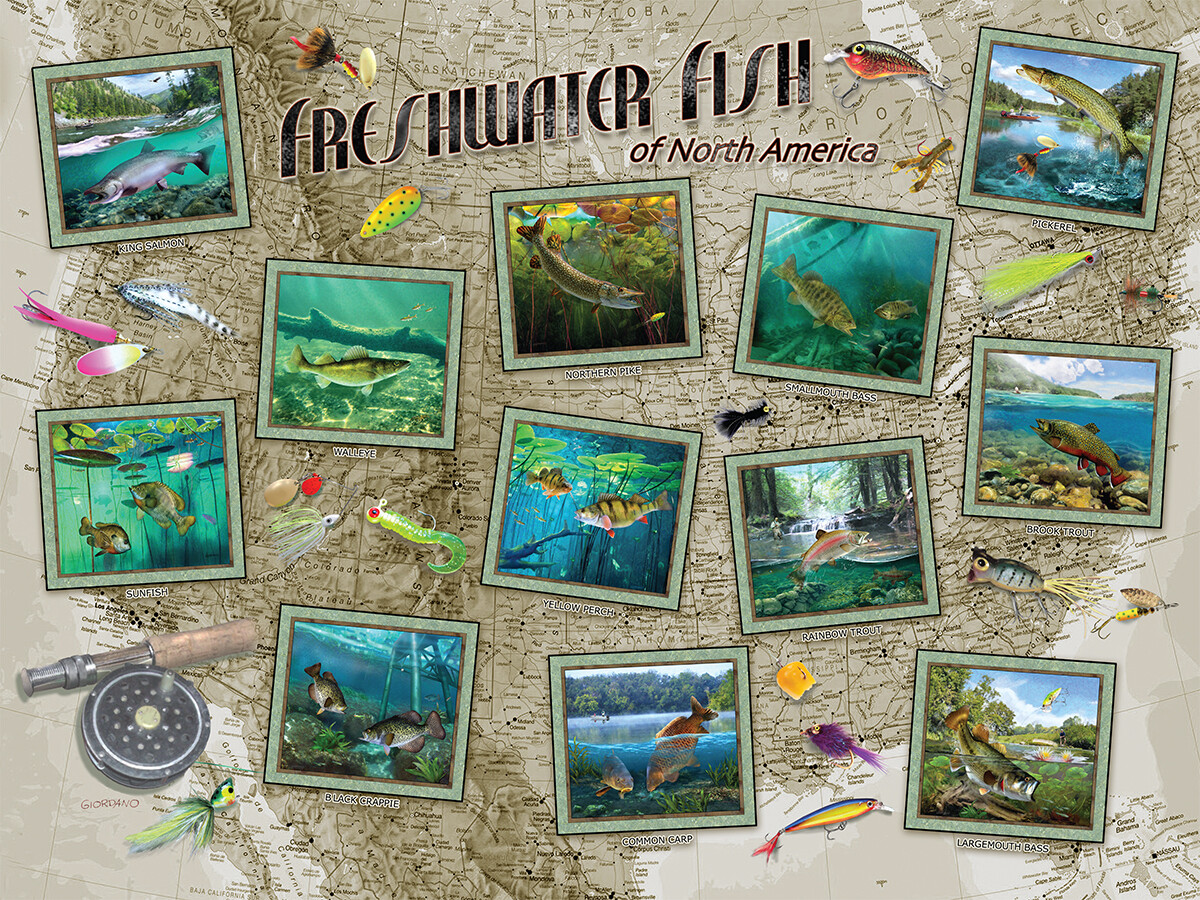 Freshwater Fish Of North America 550 Pc