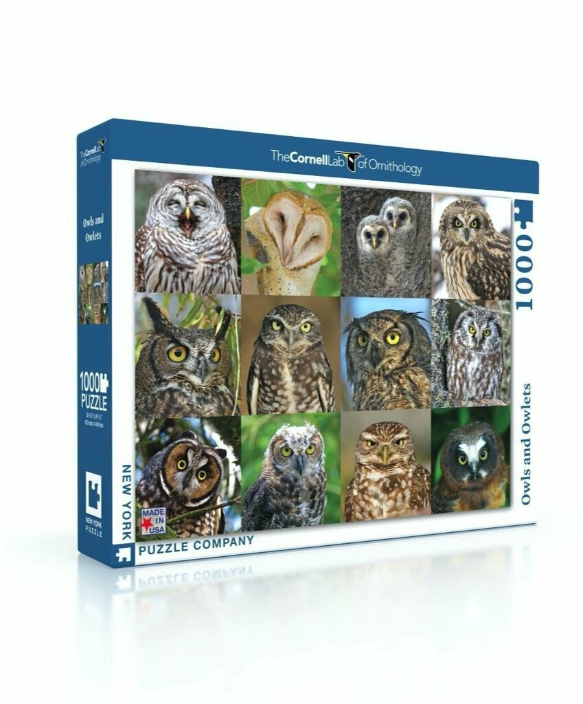 Owls And Owlets 1000 Pc