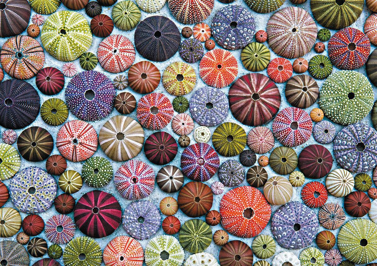 Sea Urchins 1000 Pc