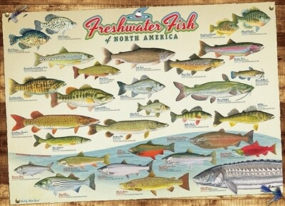 Freshwater Fish Of North America 1000 Pc