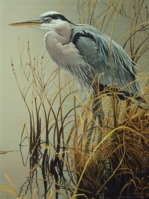 Great Blue Heron 500 Pc