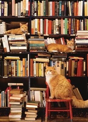 Gotham Bookstore Cats 500 pc