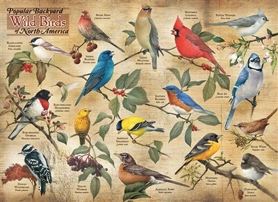 Popular Backyard Wild Birds Of North America 1000 Pc