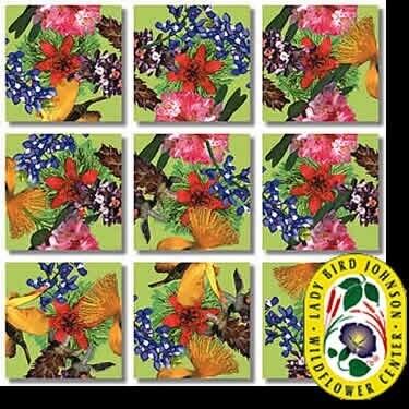 American Native Flowers